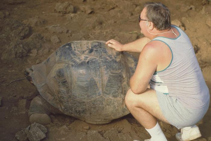 Riesenlandschildkröte, Darwin-Station, Galapagos